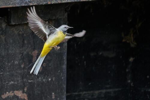 Dave Heyworth - Free as a bird